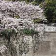 Sakura2019_041