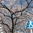 Sakura2019_037