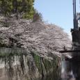 Sakura2019_042