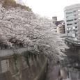 Sakura2019_049