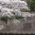 Sakura2019_053