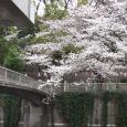 Sakura2019_045