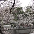 Sakura2019_046