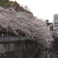 Sakura2019_047