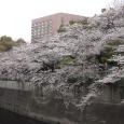 Sakura2019_052