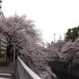 Sakura2019_051