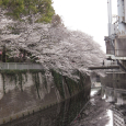 Sakura2019_054