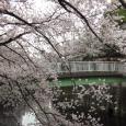 Sakura2019_050