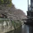 Sakura2019_008