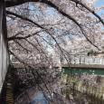 Sakura2019_061