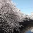Sakura2019_055