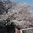 Sakura2019_058