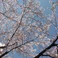 Sakura2019_059