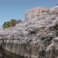 Sakura2019_064