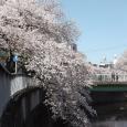 Sakura2019_063