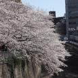 Sakura2019_056