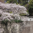 Sakura2019_066