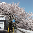 Sakura2019_062