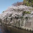 Sakura2019_067