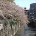 Sakura2019_072