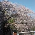 Sakura2019_073