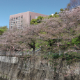 Sakura2019_078