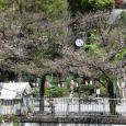 Sakura2019_074