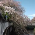 Sakura2019_077
