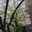 Sakura2019_070