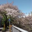 Sakura2019_076
