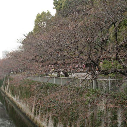 Sakura0324_2