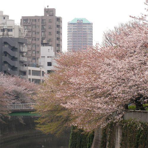 Sakura0406_3