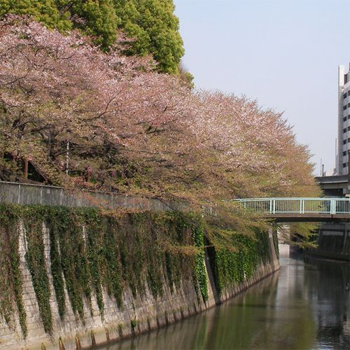 Sakura0410_1
