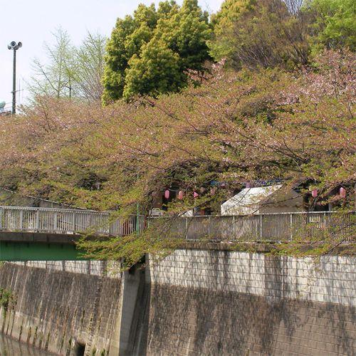 Sakura0410_2