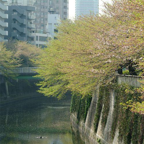 Sakura0412_1