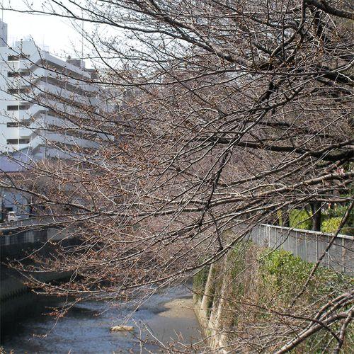 Sakura_0321