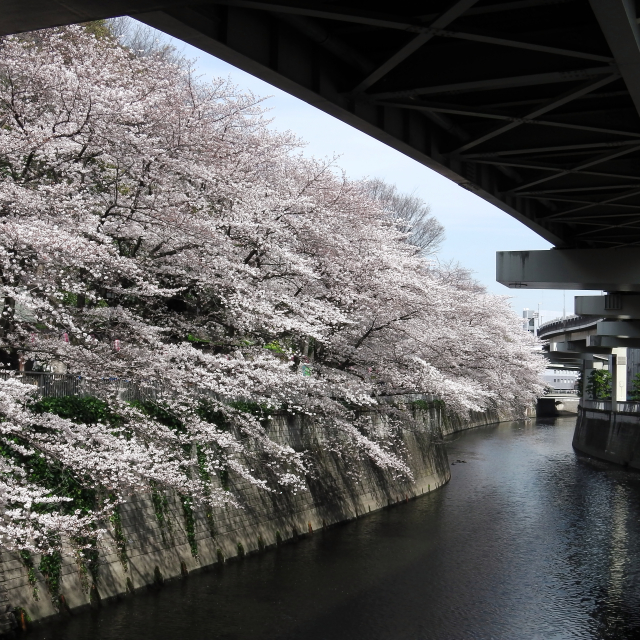 Sakura2017_106
