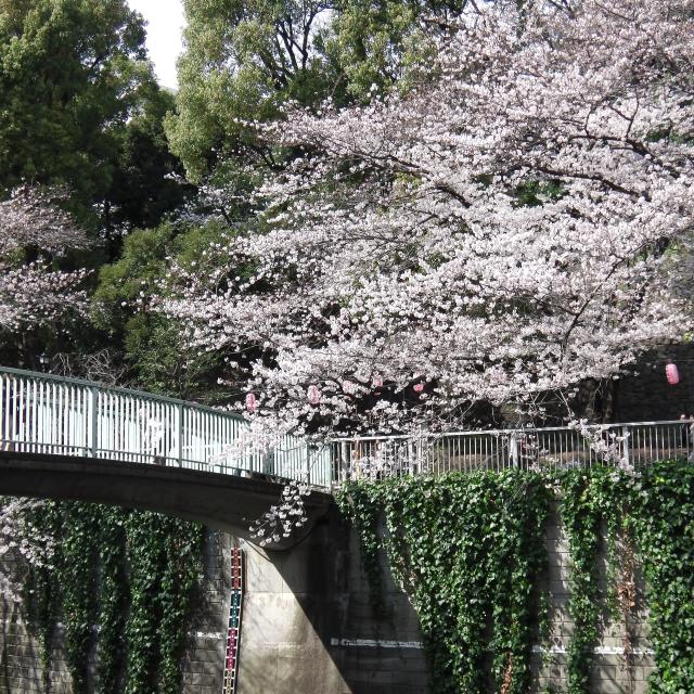 Sakura2017_107