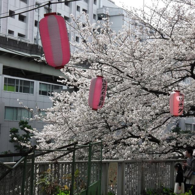 Sakura2017_110