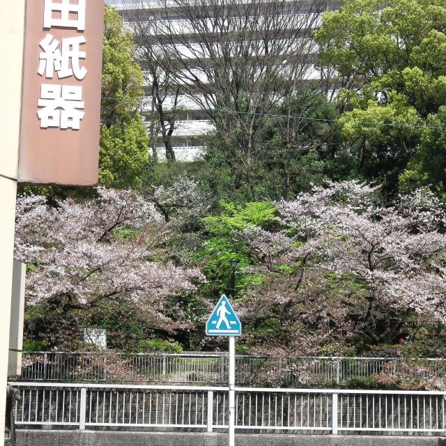Sakura2017_122