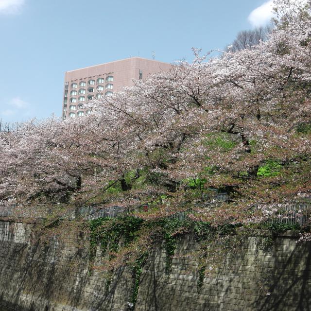 Sakura2017_125