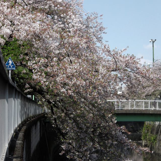 Sakura2017_127