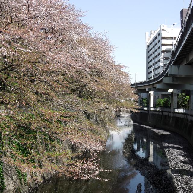 Sakura2017_135