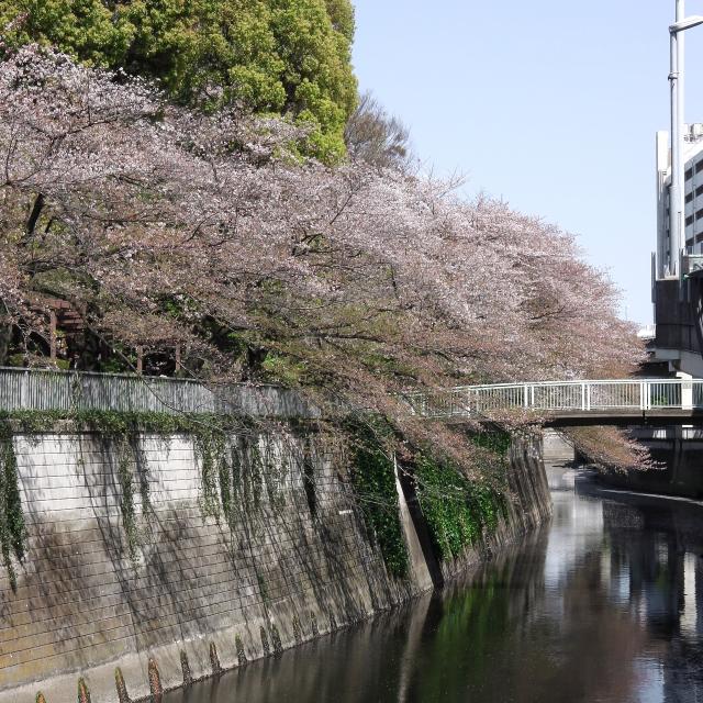 Sakura2017_137