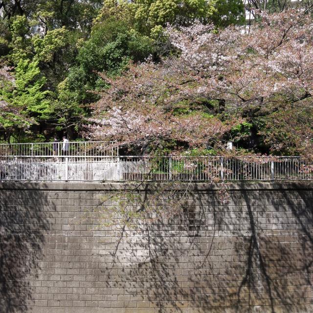 Sakura2017_138