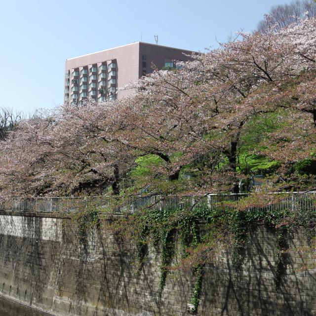Sakura2017_139