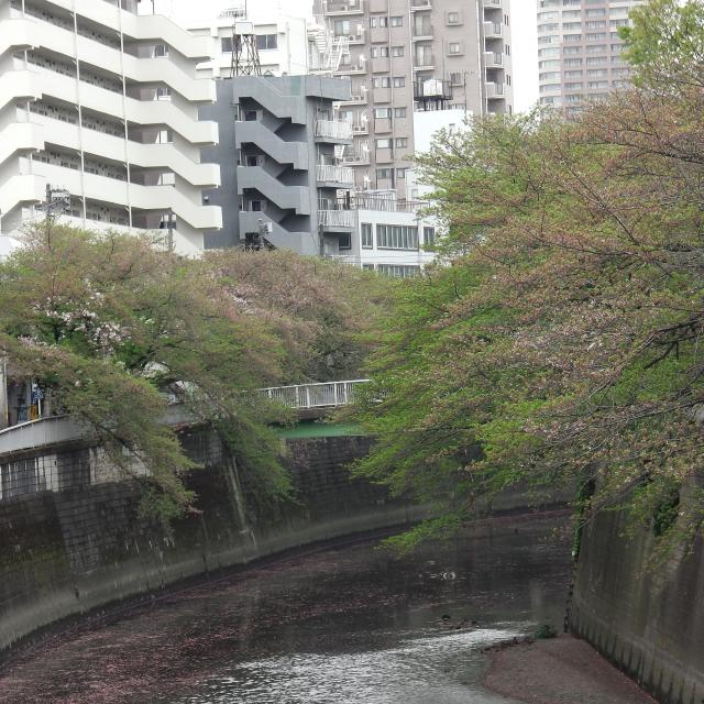 Sakura2017_150
