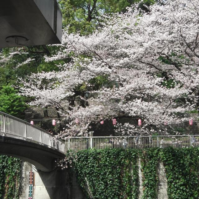 Sakura2018_050
