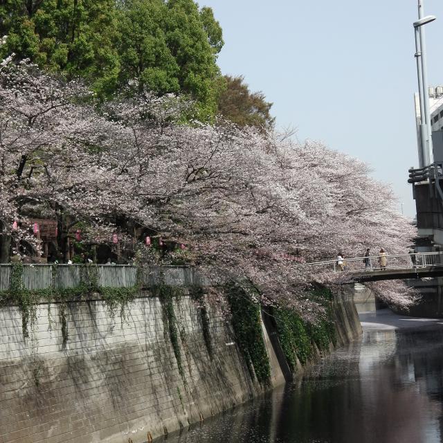 Sakura2018_053