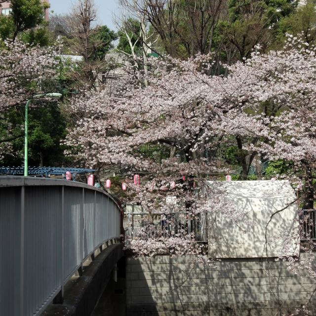 Sakura2018_058